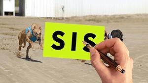 Casa de apuestas española se beneficiará del servicio de galgos de SIS